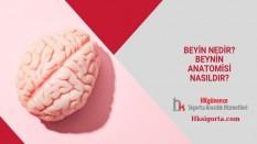 Beyin Nedir? Beynin Anatomisi Nasıldır?