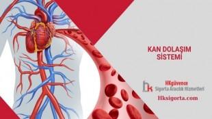 Kan Dolaşım Sistemi